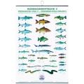 Poster cu pestii din apele dulci FIAP II #2201