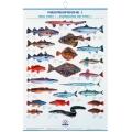 Poster cu pestii de mare europeni FIAP #2203